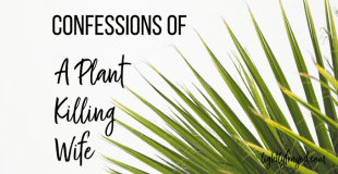Confessions of a Plant Killing Wife